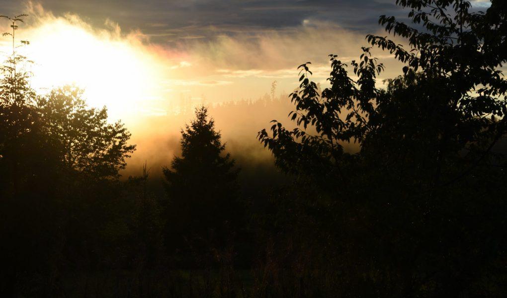 Man sieht einige Bäume als schwarze Shilouetten. Hinter ihnen wabern Nebelwolken, die von hinten von der Sonne angestrahlt werden